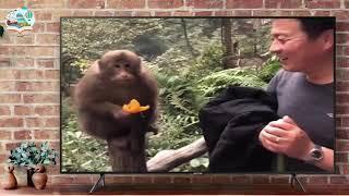 أفضل فيديو مضحك عن الحيوانات | اتحداك ان لا تضحك - Funny Animals