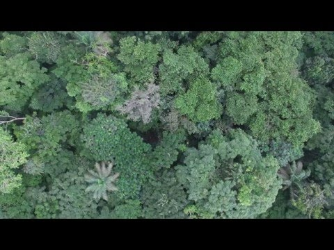 Forest Drone Monitoring trial - Azeitona Protected Area - Príncipe