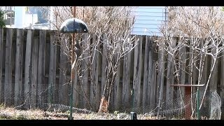 How To Keep Squirrels Out Of Bird Feeders !