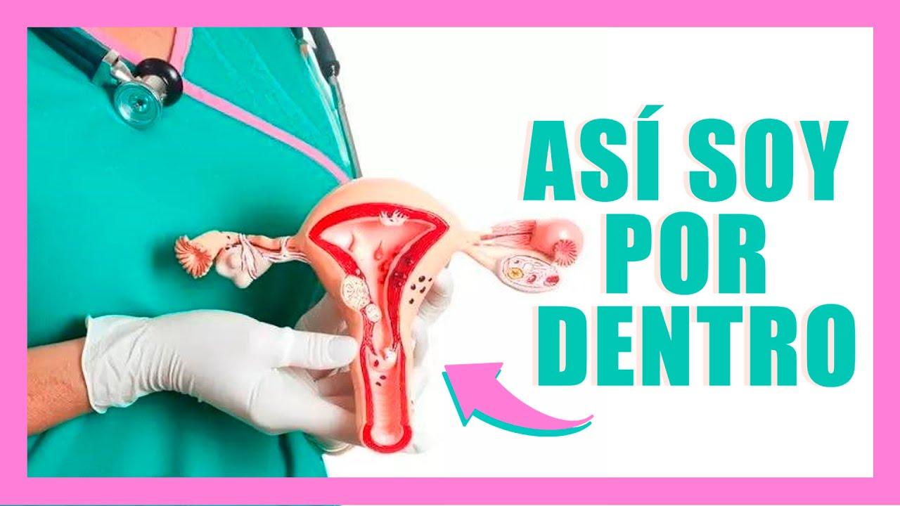 Aparato Reproductor Femenino | Anatomia de la mujer - YouTube