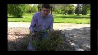 How to Grow and Care For Azaleas Video