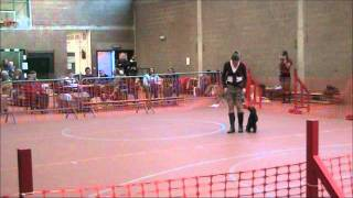 English Cocker Spaniel Nikita Canine Freestyle (dog Dance)