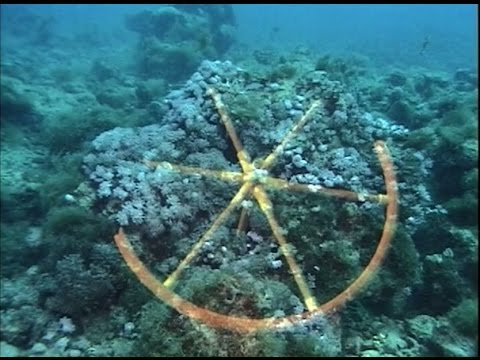Chariot wheels found in the red sea