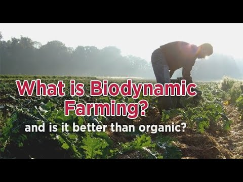 Biodynamic Agriculture - Who Was Rudolf Steiner? - (CSA) Community Supported Agriculture