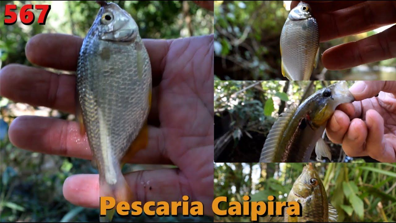 Pescaria Caipira - Em busca dos pequenos gigantes Lambaris - Fishingtur na TV 567