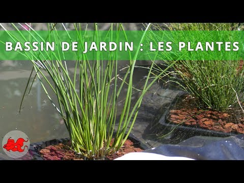 bassin de jardin plantes aquatiques youtube. Black Bedroom Furniture Sets. Home Design Ideas