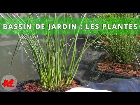 Bassin de jardin  Plantes aquatiques  YouTube