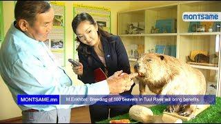 M Enkhbat   Breeding of 100 beavers in Tuul River will bring benefits