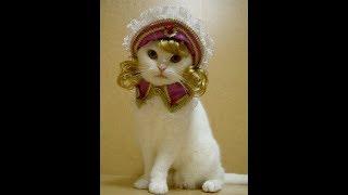 Подборка Смешная   Супер Котята. Смешные кошки приколы про кошек и котов 2017 Лучшее Funny Cats