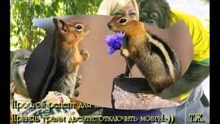 смешные фотографии животных, прикольные видео с животными.