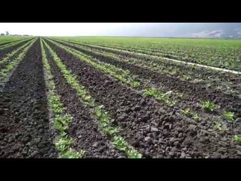 NH3 Service Co. Services, Salinas - Drone Aerial Video,  Agriculture