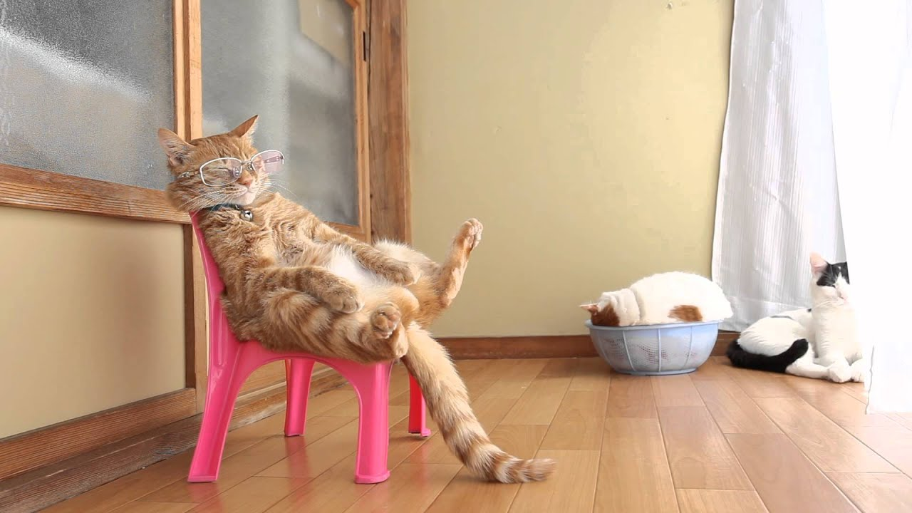 wheelchair for cats mid century modern chairs target 椅子に座る猫 cat sitting in a chair 2015 6 youtube