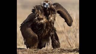 Самые хищные птицы