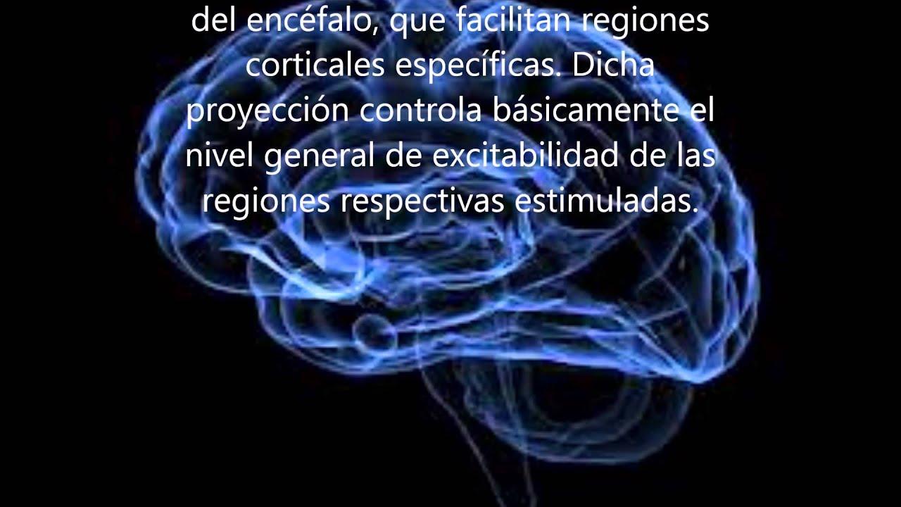 Fantástico Anatomía Y Funciones Del Cerebro Adorno - Anatomía de Las ...