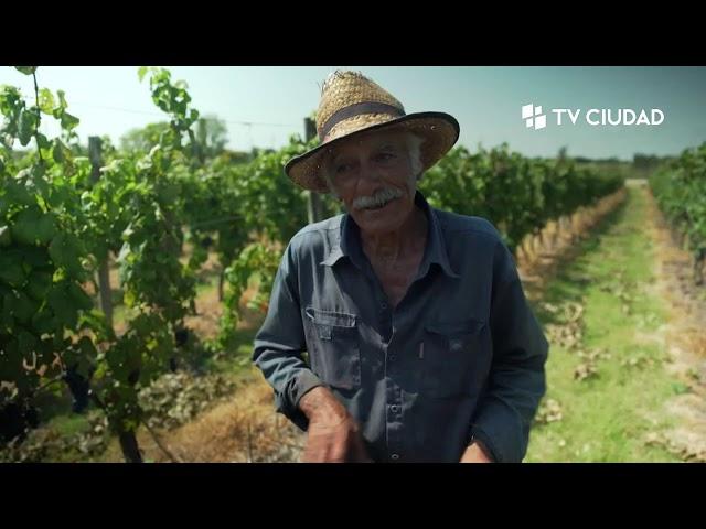 Historias de Vino | Capítulo 6: Vendimiadores