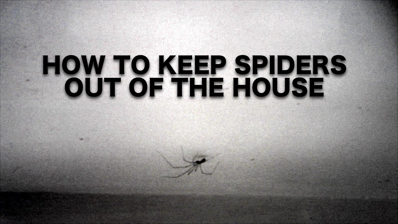 Spiders how to keep them out the house daily vlogs for How to keep spiders out of the house