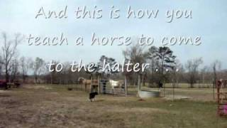 Training Trail Horses With Dogs And Bridges (tennessee Walking Horses)