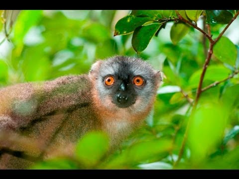 Journey to the Land of Lemurs, Madagascar 2013