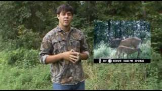 Deer And Water Sources And Summer Patterns : The Huntin Grounds