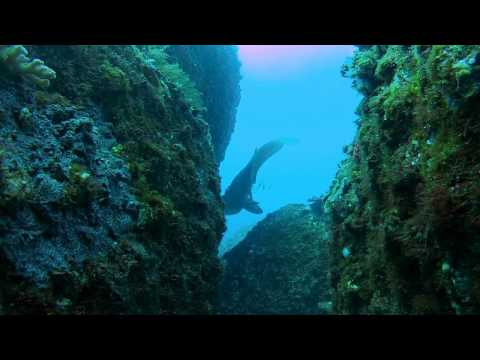 Diving the Sunshine Coast Reefs 22-Sept-2012
