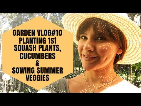 GARDEN VLOG10 PLANTING SQUASH, CUCUMBERS, CHARD & SOWING SUMMER SEEDS!