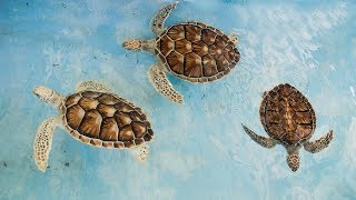 Baby Turtles Song - Turtles swimming in the sea - Kids animal song learn about turtles