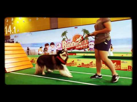 Pet Show Expo in Guangdong 20150627