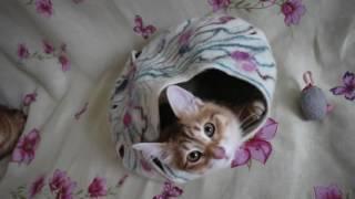 Гнездо кота