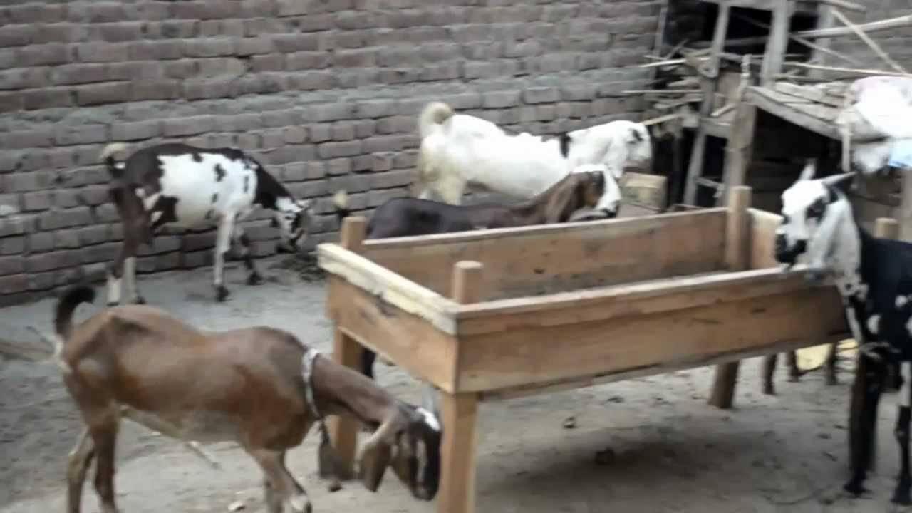 Watch on Farm Animals