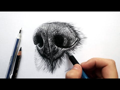 How To Draw A Realistic Dog Nose With Graphite - Drawing Tutorial | Leontine Van Vliet