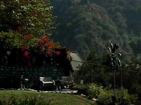 Bear In Tree Monrovia CA