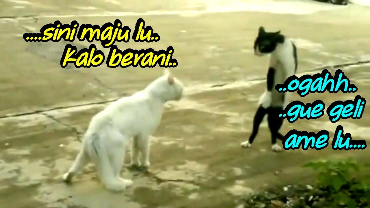 Gambar Kucing Bikin Ngakak godean.web.id