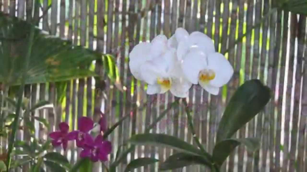 Sitio litre jardin de orquideas puerto de la cruz for Jardines de orquideas