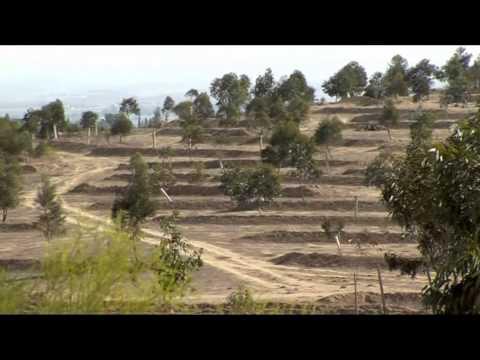 Planting Trees - Pushing Back the Desert
