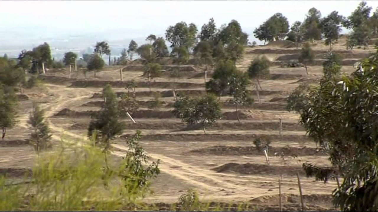 Planting Trees - Pushing Back the Desert - YouTube