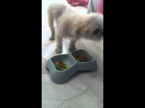 Charlie eat vegs & kibbles with coconut oil
