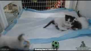 Patience's Kittens: Breakout Video