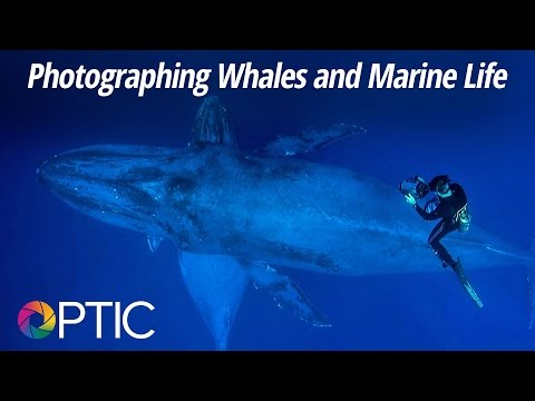 Optic 2016: Photographing Whales and Marine Life with Flip Nicklin