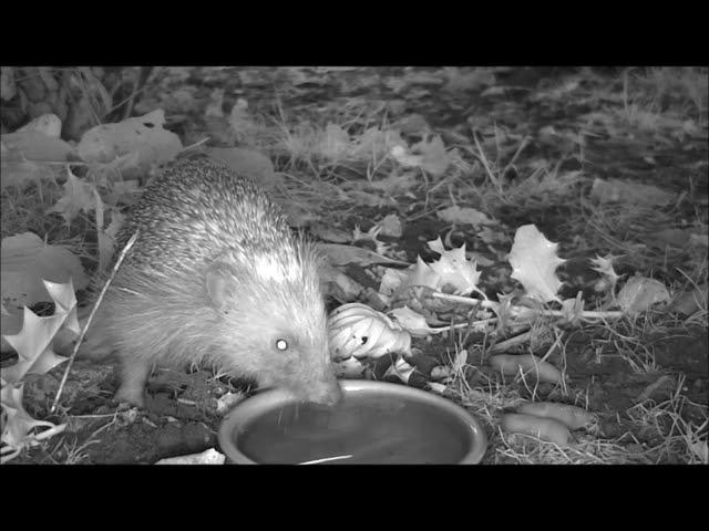 Wildlife Trail Camera - 27.7.2021