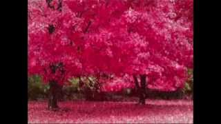 FictionJunction - Hanamori no Oka