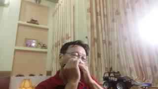女兒情  ( 楊洁 - 許鏡清 ) - TÌNH NHI NỮ ( Dương Khiết - Hứa Cảnh Thanh ) - Hòa tấu Harmonica .