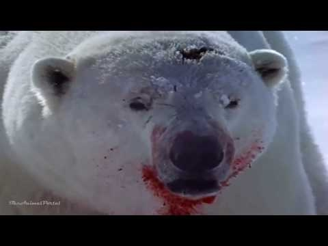 Arctic Kingdom - Life At The Edge