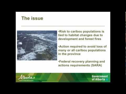Government of Alberta Caribou Strategy - Dave Hervieux