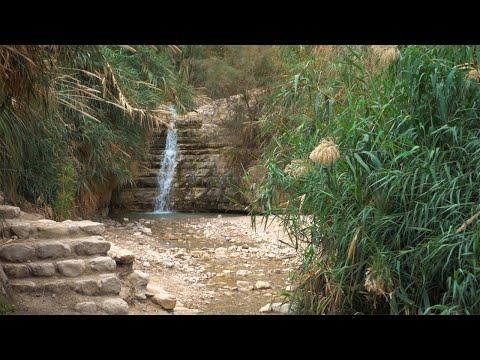 Dead Sea Oasis, Ein Gedi, Israel