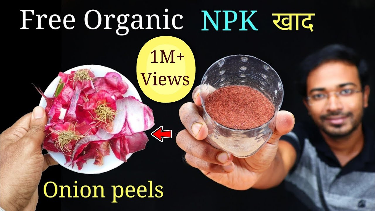 How to EASILY make Onion peel fertilizer in THREE different ways