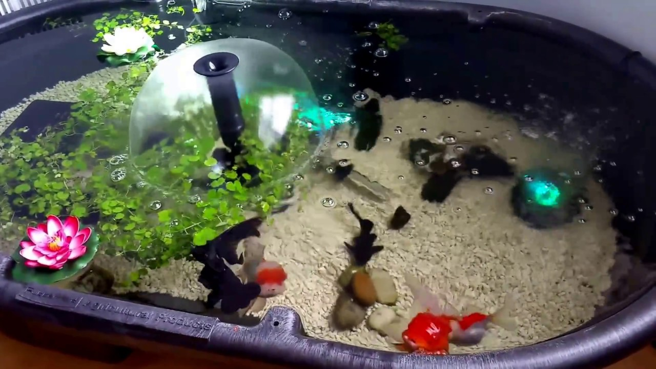 Small indoor goldfish pond youtube for Small goldfish pond