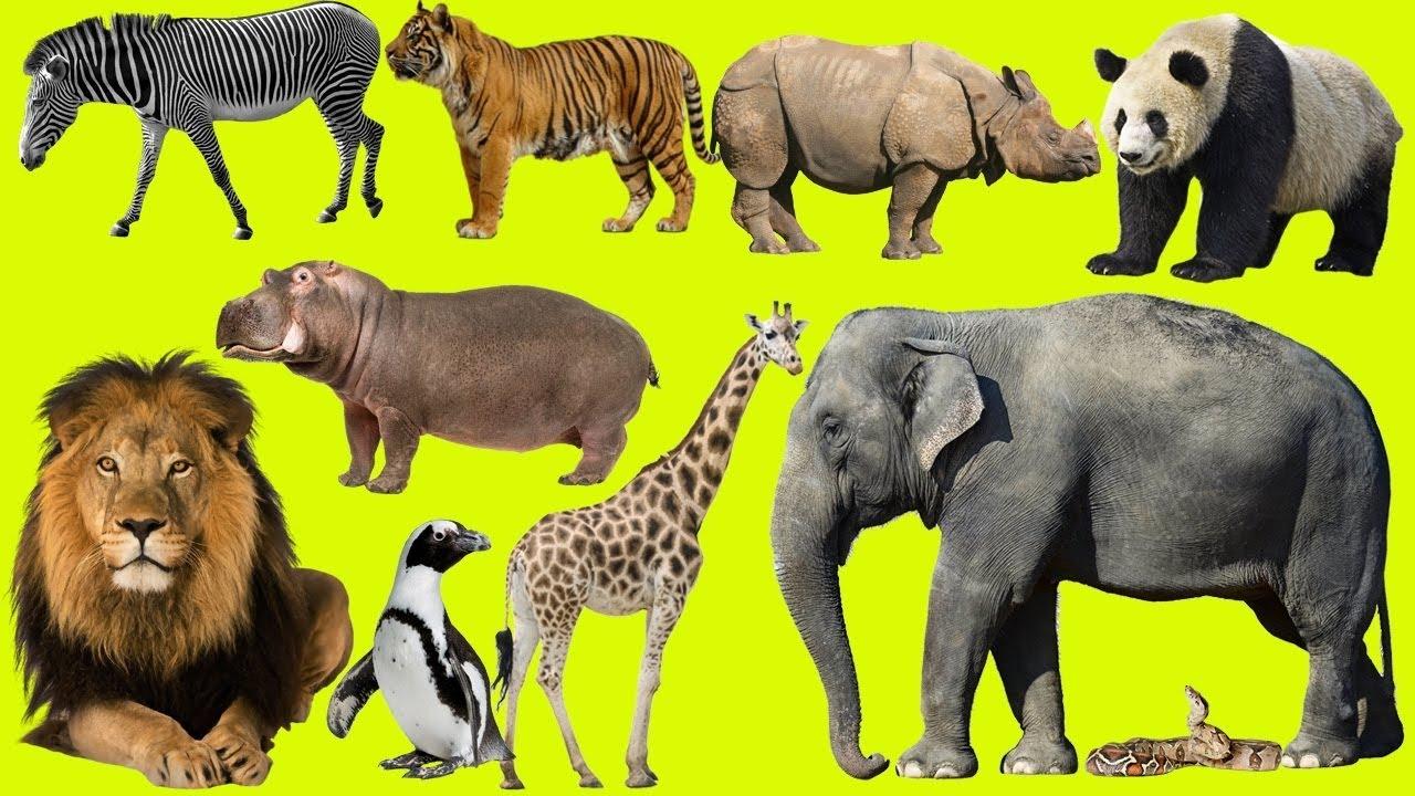 is carisoprodol harmful animals list