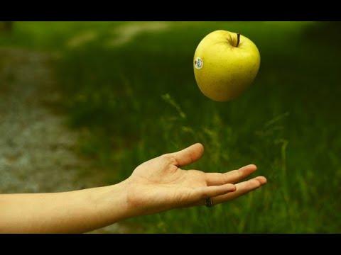 Яблоко массой 150 г свободно падает с ветки яблони