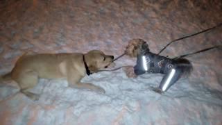 Собака — друг человека.Рич vs Лорд. (Позитив)