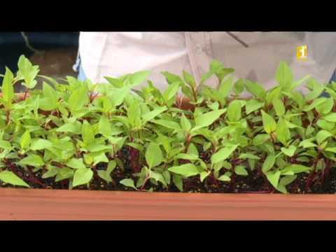 16 astuce jardinage repiquage de jeunes plants youtube. Black Bedroom Furniture Sets. Home Design Ideas